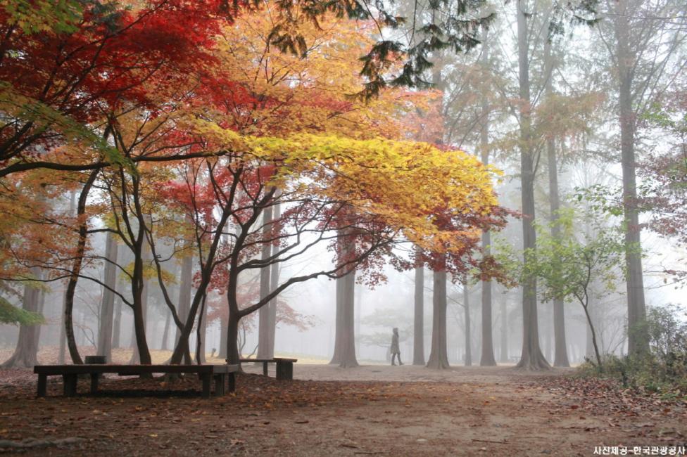 Gangwon Province: Nami Island