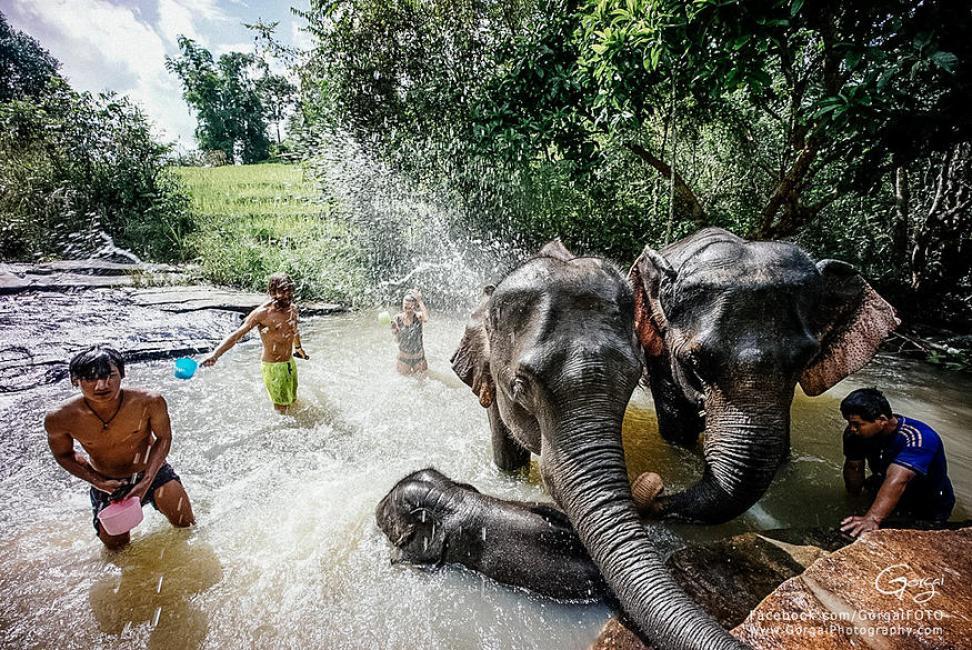 Karen Village Elephant Sanctuary: Chiang Mai, Thailand