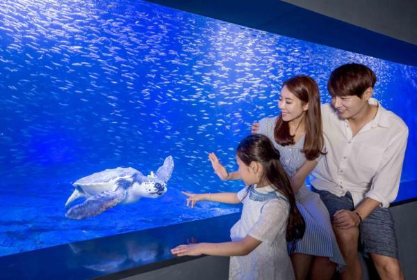 Seoul 63 Aquarium